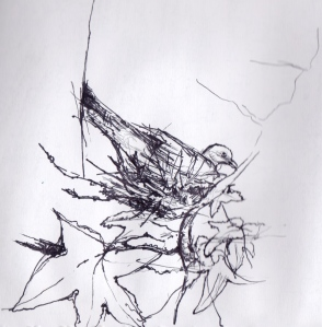 Nesting pigeon at Esotera - drawing by Fiona whilst manning